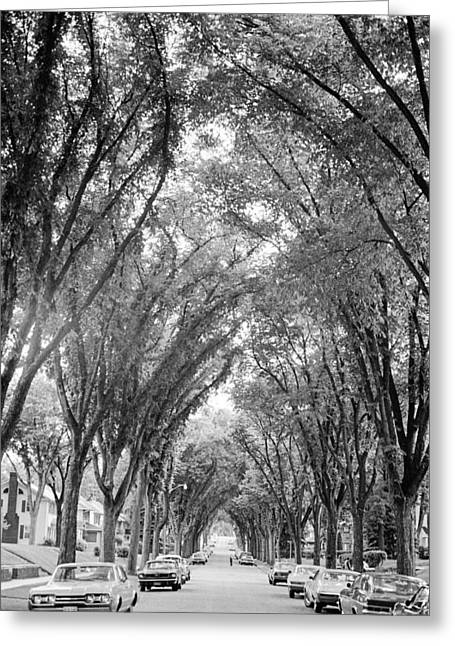 Greeting Card featuring the photograph Cathedral Of Trees by Mike Evangelist