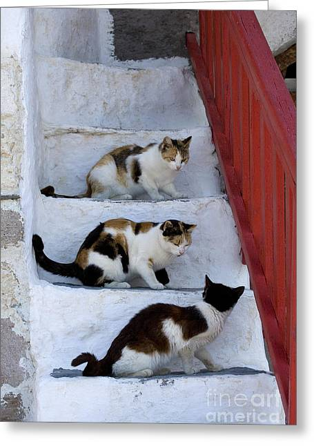Cats On A Staircase, Greece Greeting Card
