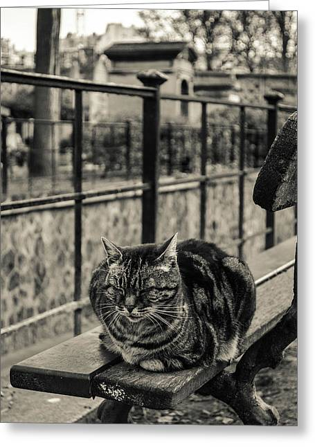 Catspotting Greeting Card by Nate Medvedeva