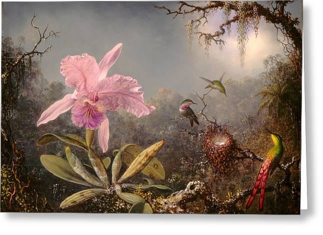 Cattleya Orchid And Three Hummingbirds Greeting Card by Martin Johnson Heade