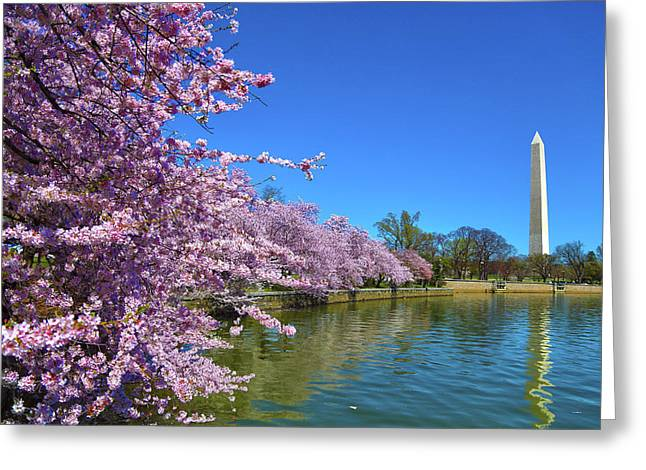 Greeting Card featuring the photograph Cherry Blossoms by Mitch Cat