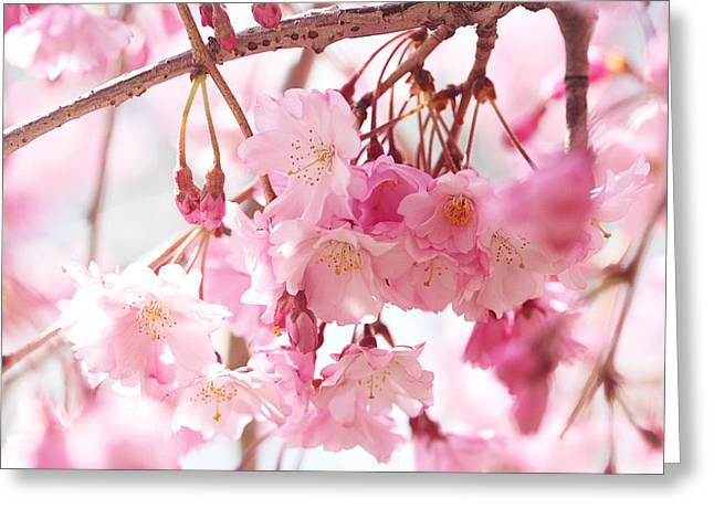 Cherry Blossoms Greeting Card by Trina Ansel