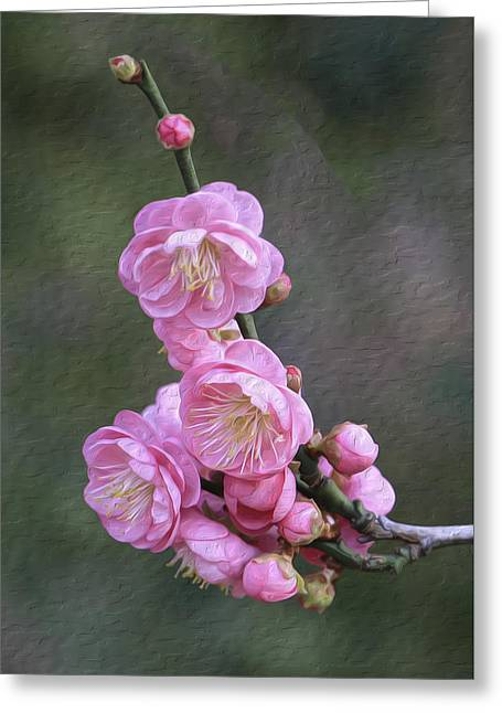 Cherry Flower Greeting Card