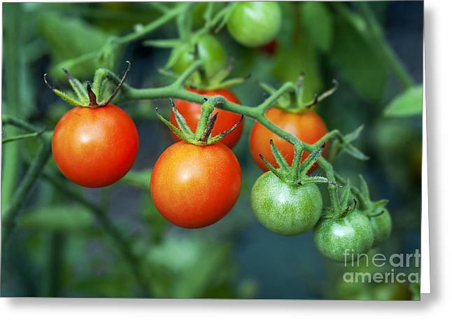 Cherry Tomatoes Greeting Card by John Greim
