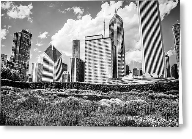 Chicago Skyline At Lurie Garden Black And White Photo Greeting Card