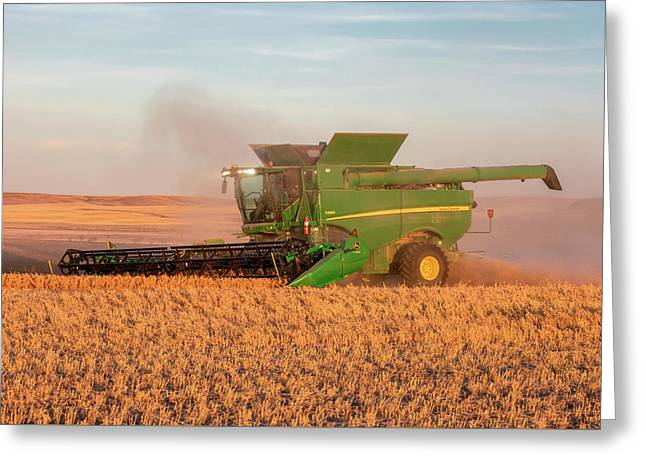 Chickpea Harvest Greeting Card by Todd Klassy