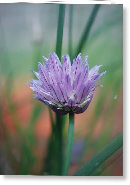 Chive Flower  Greeting Card by Lisa Gabrius