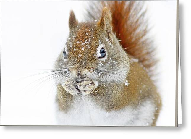 Christmas Squirrel Greeting Card