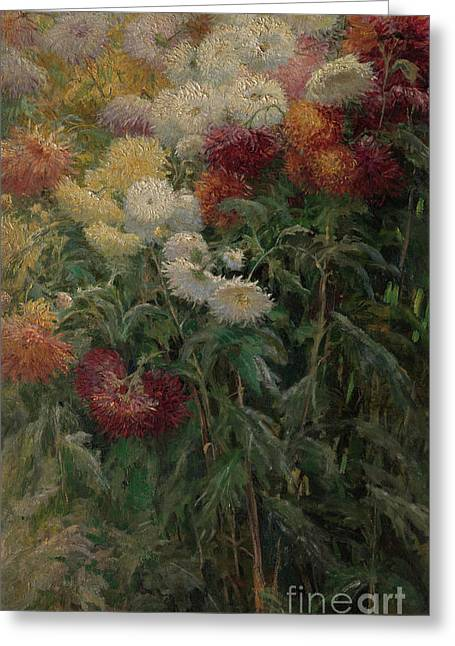Chrysanthemums In The Garden At Petit-gennevilliers Greeting Card by Gustave Caillebotte