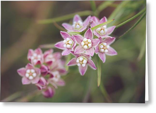 Greeting Card featuring the photograph Climbing Milkweed Flower Umbels by Alexander Kunz