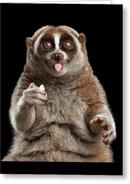 Close-up Lemur Slow Loris Isolated Black Background Greeting Card