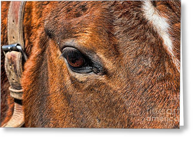Close Up Of A Horse Eye Greeting Card