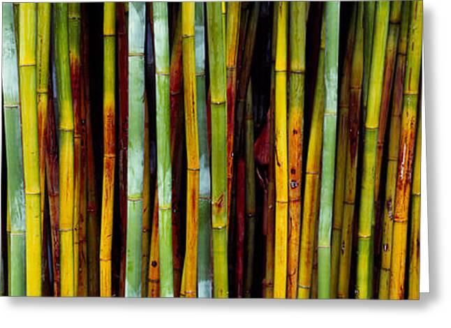 Close-up Of Bamboos, Kanapaha Botanical Greeting Card