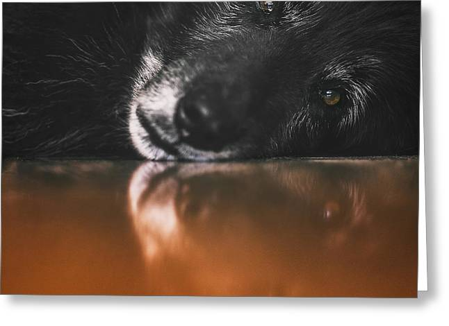 Close Up Portrait Of A Belgian Sheepdog Greeting Card