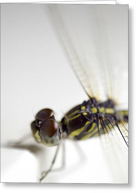 Close Up Shoot Of A Anisoptera Dragonfly Greeting Card
