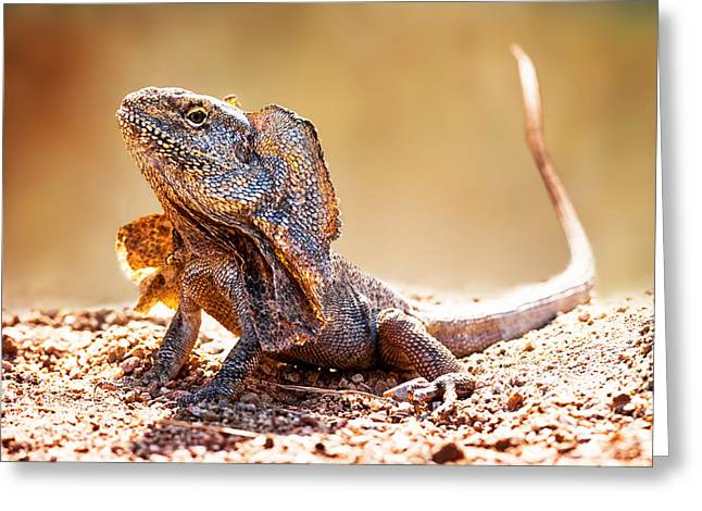 Closeup Of Alert Frilled Neck Lizard Greeting Card by Susan Schmitz