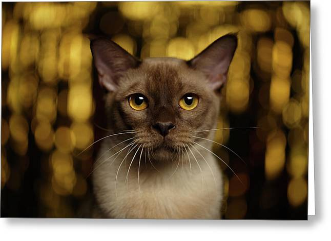 Closeup Portrait Burmese Cat On Happy New Year Background Greeting Card