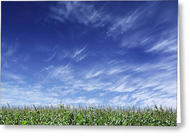 Clouds Over Cornfield Greeting Card