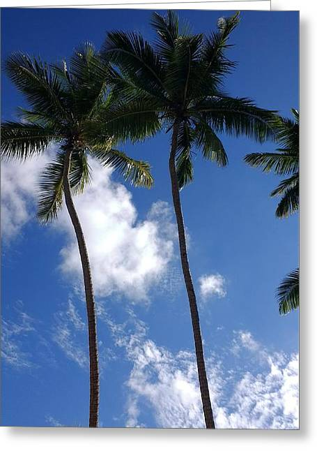 Coconut Trees Greeting Card by Sheryl Chapman Photography