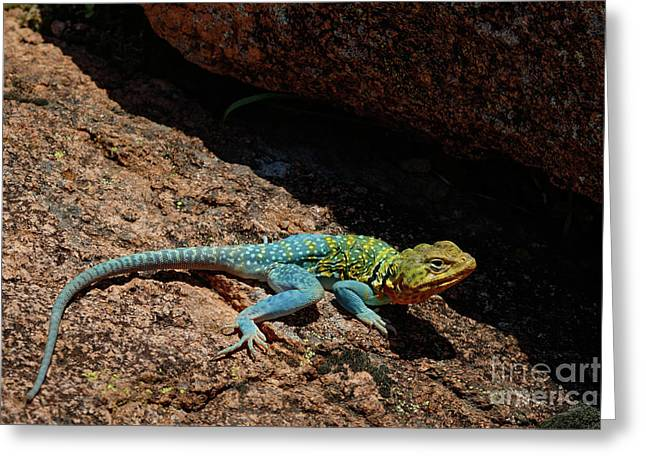 Colorful Lizard II Greeting Card