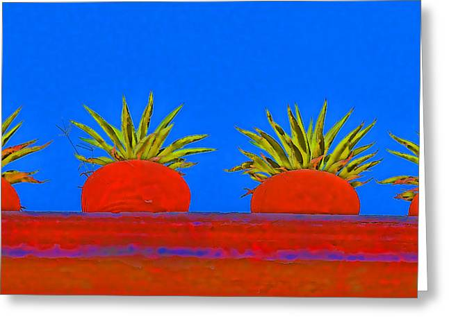 Colorful Potted Plants Mexico Greeting Card by Carol Leigh