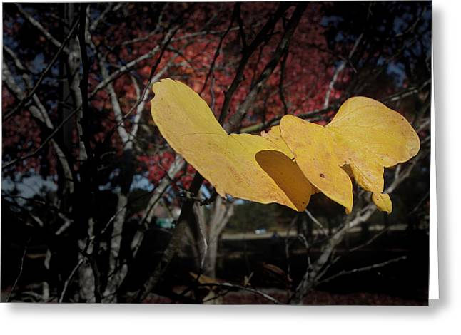 Greeting Card featuring the photograph Colors Of Fall by Joseph G Holland