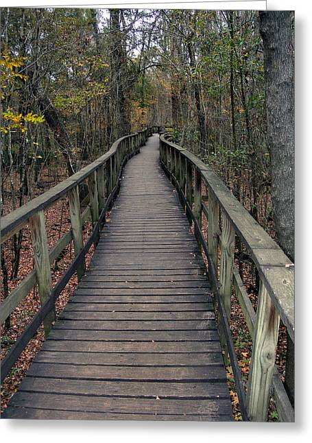Congaree Swamp Greeting Card by Skip Willits