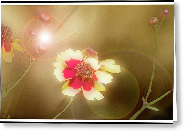 Coreopsis Flowers And Buds Greeting Card