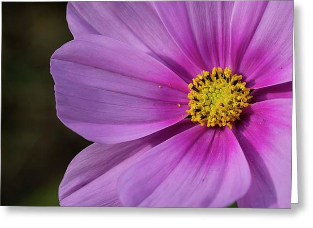 Greeting Card featuring the photograph Cosmos by Elvira Butler