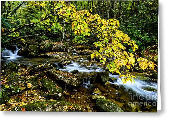 Cranberry Wilderness Autumn Greeting Card by Thomas R Fletcher