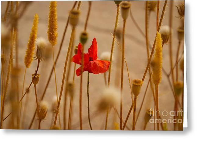 Cretan Flower  Greeting Card by David Warrington