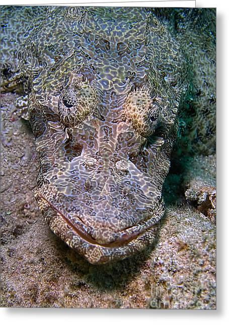 Crocodile Fish Greeting Card