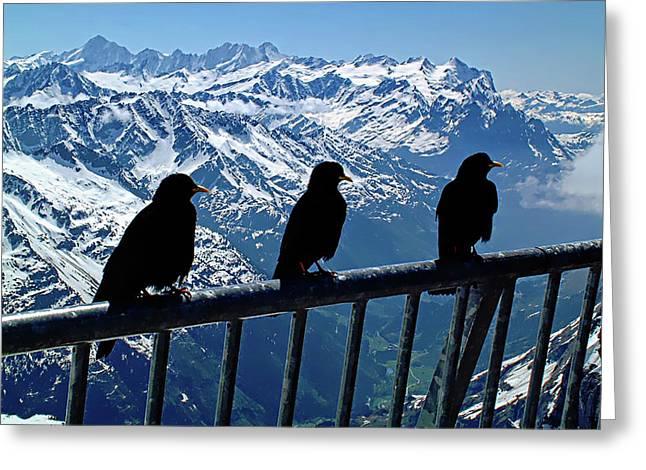 Greeting Card featuring the photograph Crows On Top Of Mount Titlis - Switzerland by Joseph Hendrix