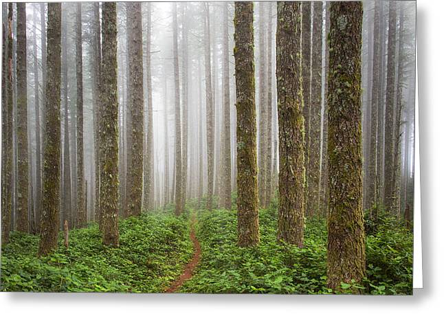 Cummins Wilderness Trail Greeting Card by Leland D Howard
