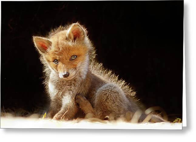 Cute Baby Fox Greeting Card