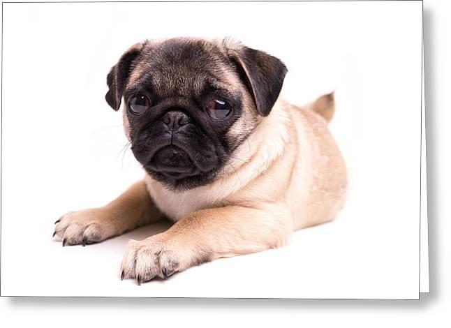 Cute Pug Puppy Greeting Card by Edward Fielding