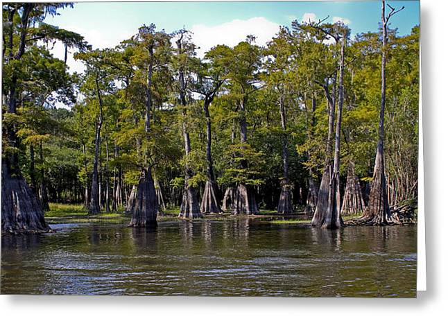 Cypress On The Suwannee Greeting Card