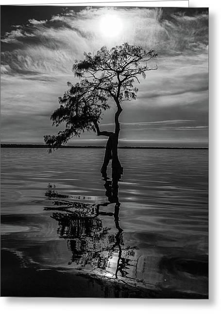 Cypress Reflections Greeting Card