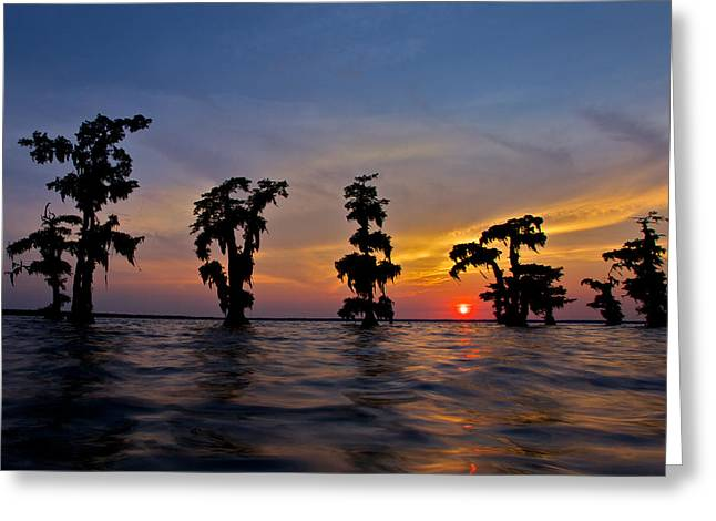 Greeting Card featuring the photograph Cypress Trees by Evgeny Vasenev