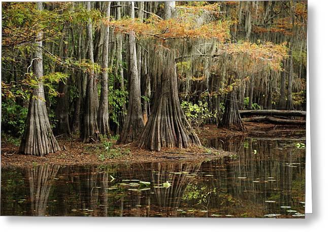 Cypress Trees In Caddo Lake Greeting Card by Iris Greenwell
