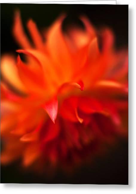 Dahlia Flame Greeting Card by Mike Reid