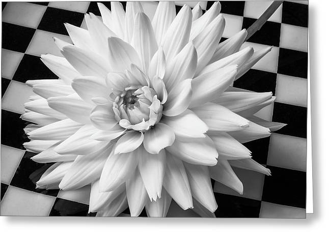 Dahlia On Checker Background Greeting Card by Garry Gay