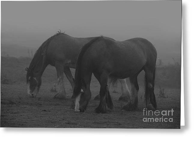 Dampened And Shrouded In Mist  Greeting Card by Paul Davenport