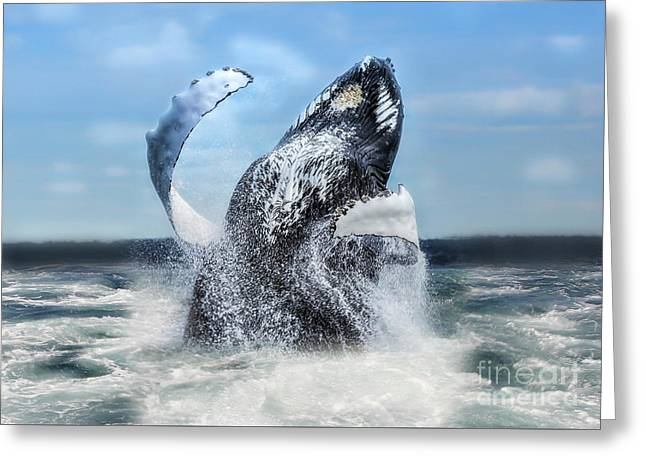 Dances With Whales Greeting Card by Nancy Dempsey