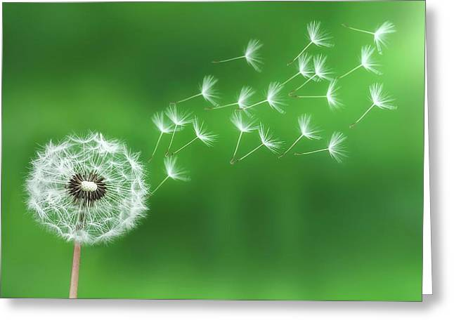 Dandelion Seeds Greeting Card by Bess Hamiti