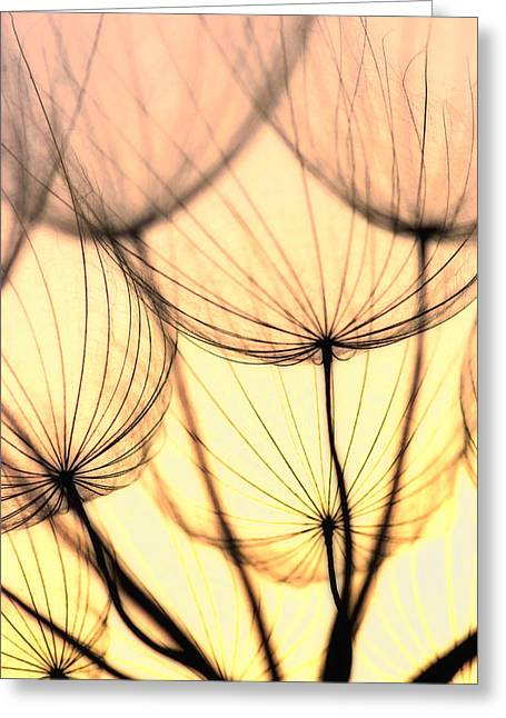 Dandelions Greeting Card by Iris Greenwell