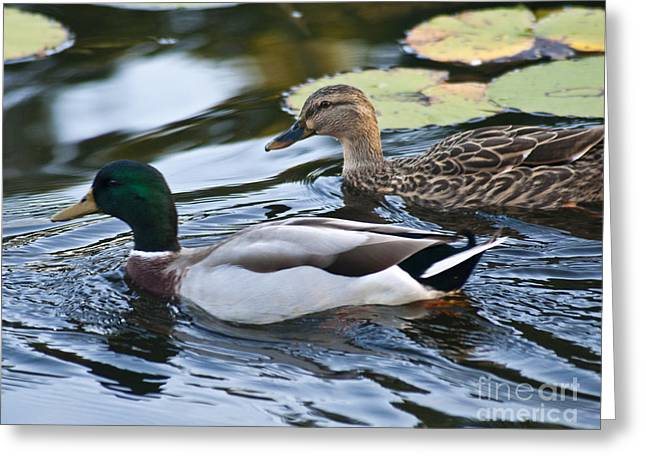 Day On The Pond Greeting Card by Alex Garcia