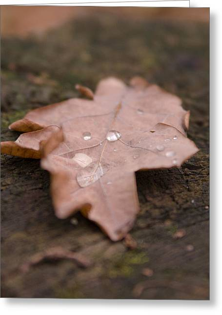 Dead Leaf Greeting Card by Mihail Antonio Andrei