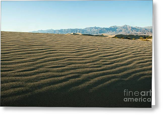 Death Valley 13 Greeting Card by Micah May