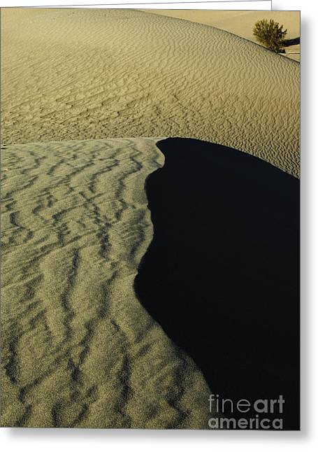Death Valley 15 Greeting Card by Micah May